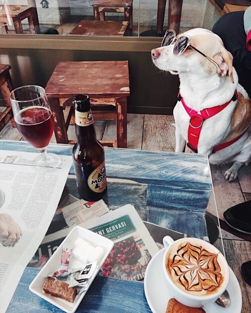10 ciudades dog friendly en las que tratan a los perros como humanos